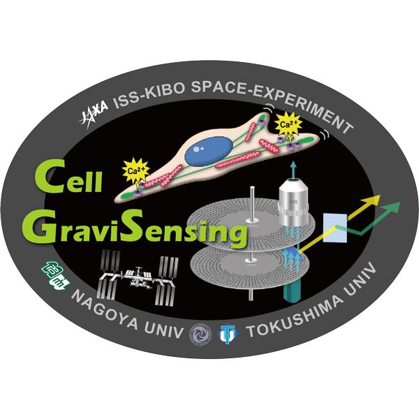 細胞の重力センシング機構の解明