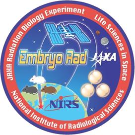 ISS搭載凍結胚から発生したマウスを用いた宇宙放射線の生物影響研究