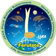 重力によるイネ芽生え細胞壁のフェルラ酸形成の制御機構