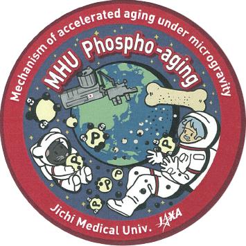 【MHU-6】微小重力の環境で老化が加速するメカニズムの研究