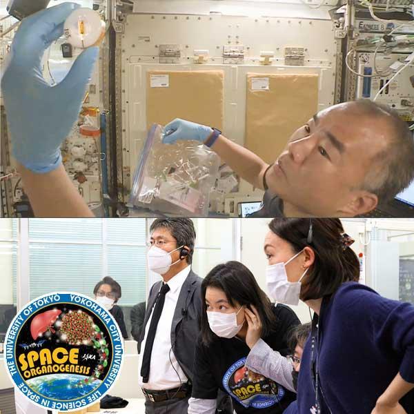 「きぼう」を使って再生医療につながるiPS細胞を用いた立体培養に関する実験を行いました!